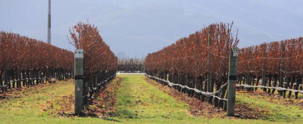 vineyard-2477730_1920