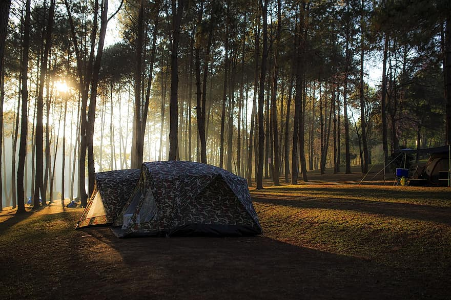 site-camp-forest
