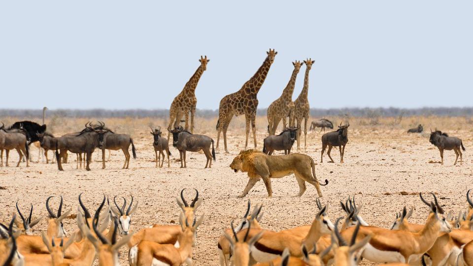 africa-1170179_960_720